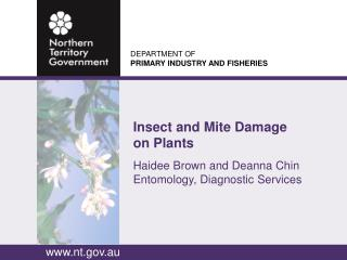 Insect and Mite Damage on Plants