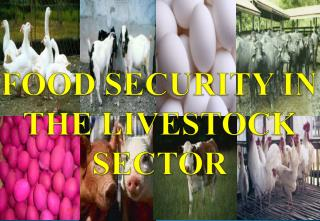 FOOD SECURITY IN THE LIVESTOCK SECTOR