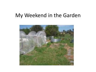 My Weekend in the Garden