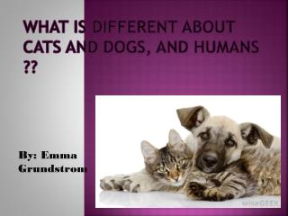 What is different about cats and dogs, and humans ??