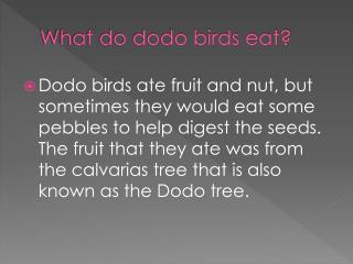 What do dodo birds eat?