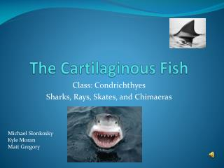 The Cartilaginous Fish