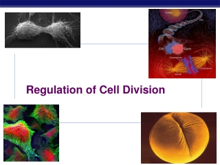 Tumor Radiation Biology