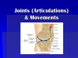 Joints (Articulations) & Movements