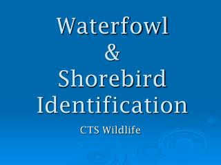 Waterfowl &  Shorebird Identification
