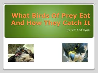 What Birds Of Prey Eat And How They Catch It