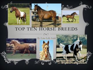Top ten Horse breeds