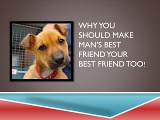 Why you Should Make Man's Best Friend Your Best Friend too !