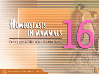 Importance of Homeostasis in Mammals