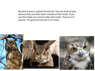 Owls are most active at night. They sleep in the day. They eat rodents. It also eats barn owl.