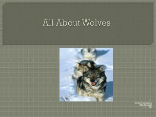 All  About Wolves