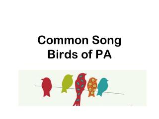 Common Song Birds of PA