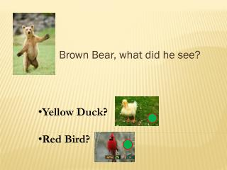 Brown Bear, what did he see?