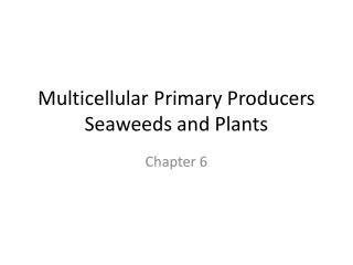 Multicellular  Primary Producers Seaweeds and Plants