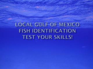 Local Gulf of Mexico fish identification Test YOUR SKILLS!