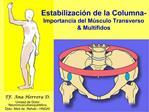 Estabilizaci n de la Columna-                        Importancia del M sculo Transverso  Mult fidos