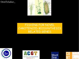 FISHING FOR NOVEL CAROTENOID BIOSYNTHESIS RELATED GENES