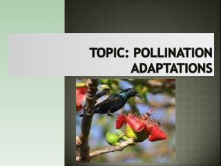 Topic: Pollination adaptations