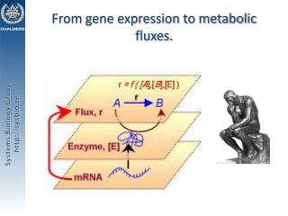 From gene expression to metabolic fluxes.