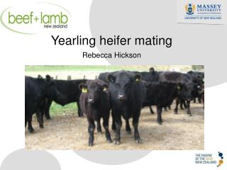Yearling heifer mating Rebecca Hickson