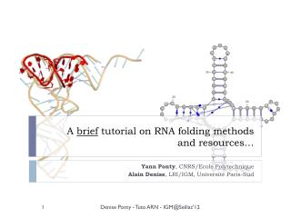 A  brief  tutorial on RNA folding methods  and resources…