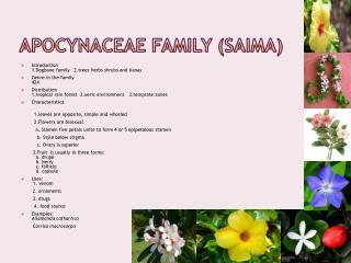 Apocynaceae  Family ( Saima )