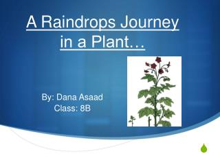 A Raindrops Journey  in a Plant…