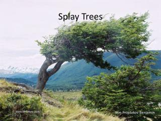 Splay Trees