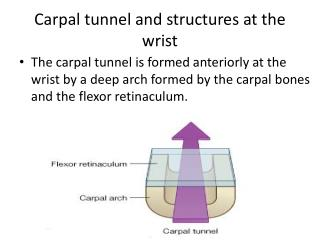 Carpal tunnel and structures at the wrist