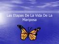 Las Etapas De La Vida De La Mariposa