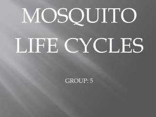 MOSQUITO LIFE CYCLES GROUP: 5
