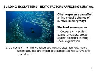 BUILDING   ECOSYSTEMS – BIOTIC FACTORS AFFECTING SURVIVAL