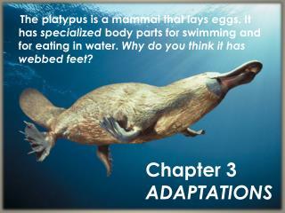 Chapter 3 ADAPTATIONS