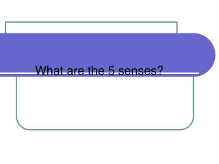What are the 5 senses?