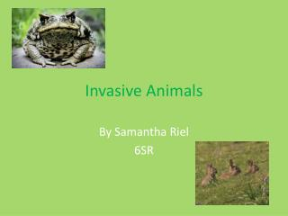 Invasive Animals