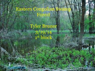 Eastern Congolian Swamp Forest  Tyler Bruner  3/19/14 1 st  block