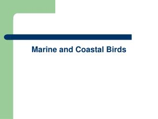 Marine and Coastal Birds