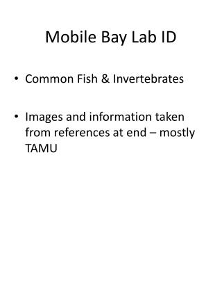 Mobile Bay Lab ID