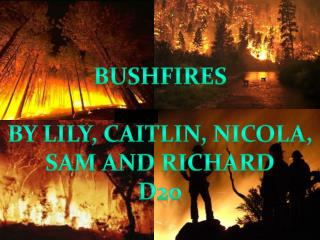 BUSHFIRES BY LILY, CAITLIN, NICOLA, SAM AND RICHARD d20