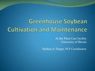 Greenhouse Soybean Cultivation and Maintenance