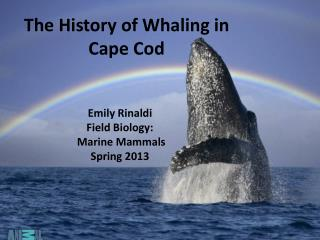 The History of Whaling in  Cape Cod