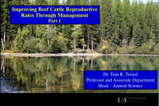 Improving Beef Cattle Reproductive Rates Through  Management Part 1