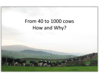 From 40 to 1000 cows  How and  Why ?