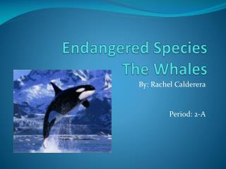 Endangered Species The Whales