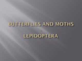 Butterflies and Moths - Lepidoptera