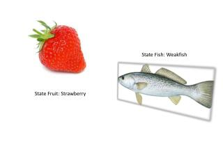 State  Fruit : Strawberry
