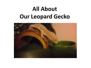 All About  Our Leopard Gecko