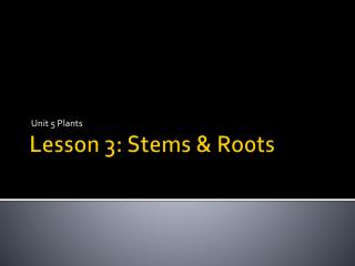 Lesson 3: Stems & Roots