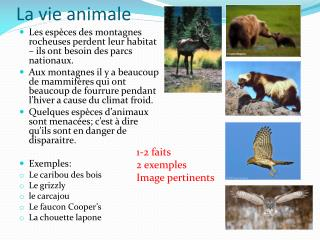 La vie animale L a vie  animale
