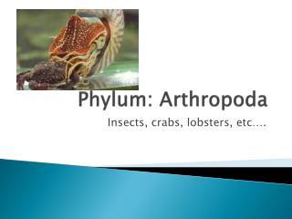 Phylum: Arthropoda